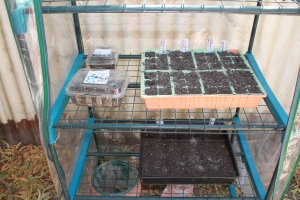 Seeds trays in the greenhouse.