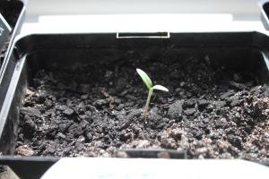 Grow lisse, grow!!